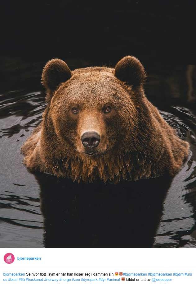 Besøk Bjørneparken i Flå du også. Opplev krokodiller, bjørner, gauper, rev, ulv, elg og mange flere spennende dyrearter.