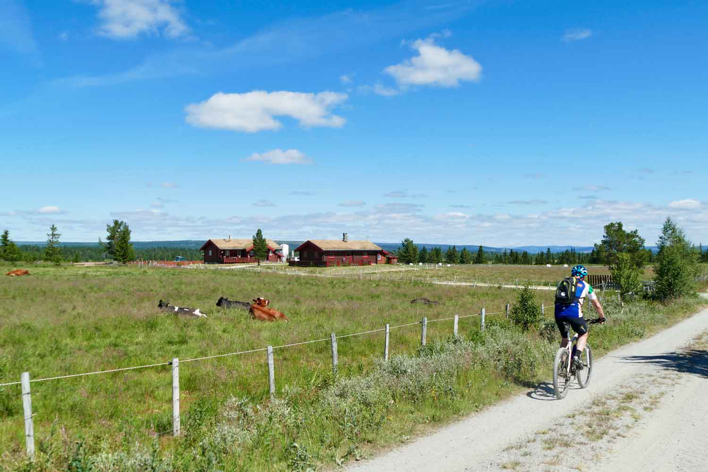 Øynebråten Støl, Golsfjellet, Valdres, Hallingdal, Hemsedal, Kvikaku,prim og vafler. Foto: Birgit Haugen.