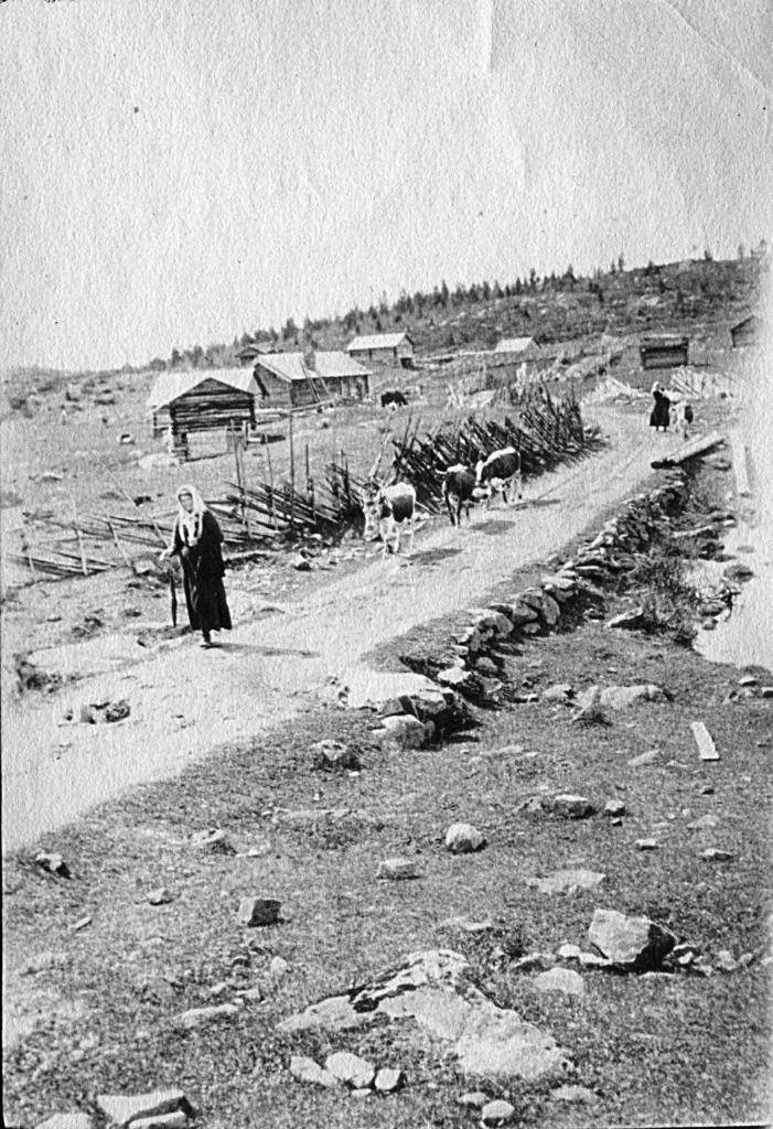 Brautemogutu, nå Riksvei 51, ca 1917. Golsfjellet i Hallingdal.