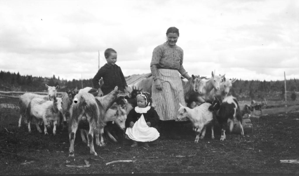 Stølsliv på Brautemo ca 1920.