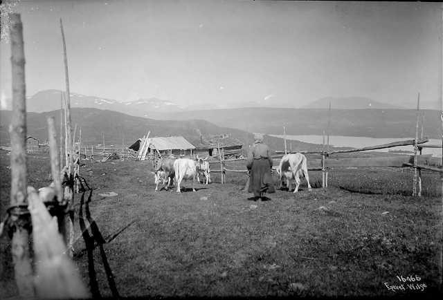 Auenhuaglia ca 1900. HIstorien om Golsfjellet.