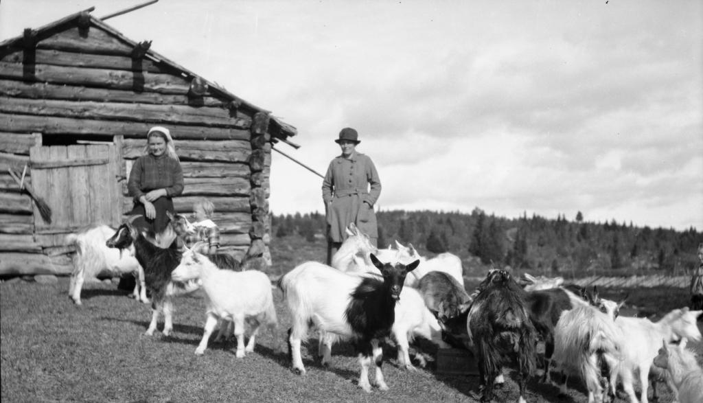 Stølsfolk møter hyttefolk ca 1920. Bygd og by, hånd i hånd.