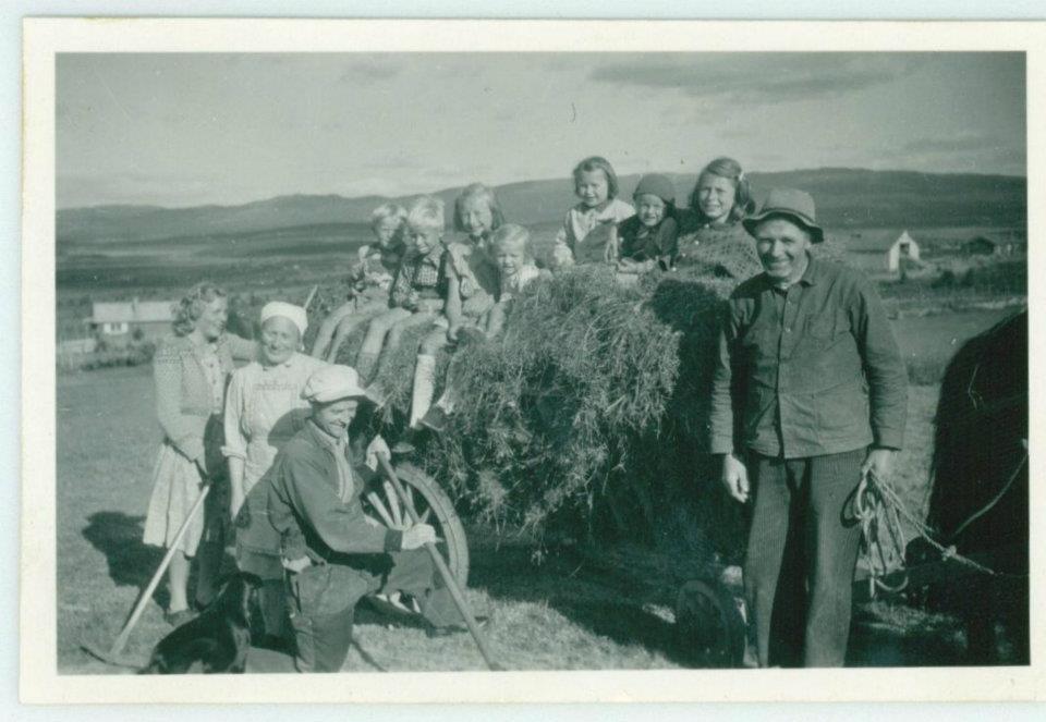 Høyonnp på Dokken ca 1955, Kamben stølslag. Golsfjellet i Hallingdal.