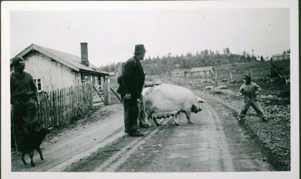 Stølsdrift på Brautemo 1934.