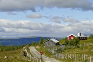 Golsfjellet rundt og Hallingrunden på Golsfjellet i Hallingdal. Sykkeltur, sykling, fjellsykling. Foto: Birgit Haugen