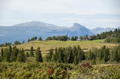 Utsikt fra Turkuppmyre, retning Storehorn i Hemsedal. Einarsetrunden. Hallingdal, Valdres. Foto: Thorgeir Røer