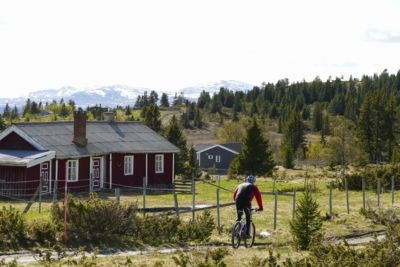 Syklist på vei mot Turkuppmyre, Einarsetrunden Golsfjellet i Hallingdal. Fjellsykling, terrengsykling, familiesykling. Foto: Birgit Haugen