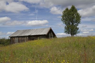 Aktiv stølsdrift er viktig for å opprettholde et levende kulturlandskap. Golsfjellet, Hallingdal, Valdres, Hemsedal. Foto: Thorgeir Røer