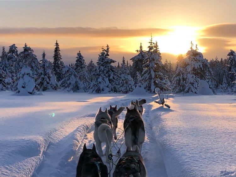Hundekjøring, Golsfjellet, Hallingdal, Bente Sofie Alhaug